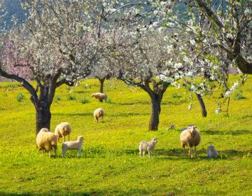 Frühlingsträume auf Mallorca