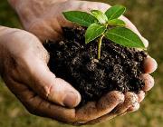 Mallorca Incentives baum pflanzen PP
